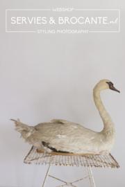 Stuffed swan