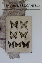 Vlinder schoolplaat 1 Sold