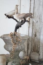 Antieke opgezette duiven Sold