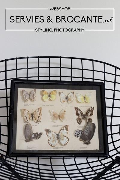 Vlinder display Sold