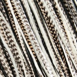 Fine Featherheads Black Tie Wispers