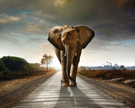 olifant-30 x 40 cm- vierkante steentjes NIEUW!!!! HLQ-02456