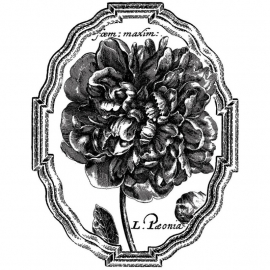 """LaBlanche Silicone Stamp 4""""X5.5"""" Framed Peony LB1171  AKTIE!!!!!!"""