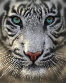 tijger - 25 x 25 cm- ronde steentjes NIEUW!!!! A090