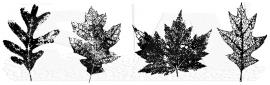 Leaf line U7-1583