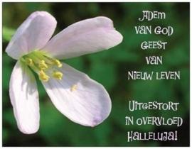(E055) Adem van God, Geest van nieuw Leven