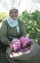 Rozenolie bio, (rosa damacena), 1 ml. Turkije