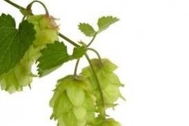 Hop CO2 5 ml