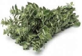 Oregano 10 ml
