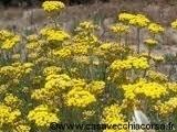 Helicryse BIO Corsicaans 5 ml
