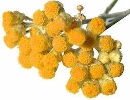 Helicryse BIO Corsicaans 2.5 ml
