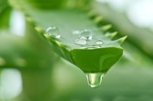 50 ml. Aloë  vera gel - Special Herp' s. voor de gevoelige huid