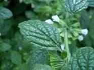 Gordelroosolie 25 ml. (navulverpakking) Merk: Kamille&Co: verzacht pijn en jeuk