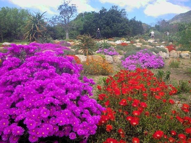 Gardenroute: met de bloemige geur van roos, geranium en een tikje kruidige strobloem