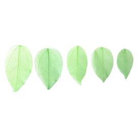 Groene blaadjes voor verwerking in giethars