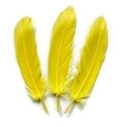 Ganzenveren groot Geel (10st)