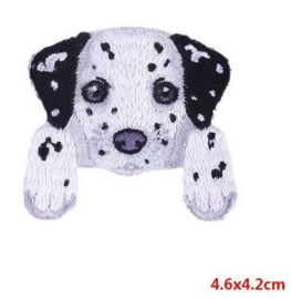 Applicatie Dalmatier