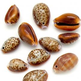 schelp bedel 'kauri' kleur bruin maat varierend tussen 16 en 20mm (BKS-03) - 5 stuks