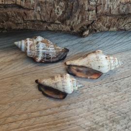 Grote spiraal schelp bedel circa 34 tot 62 x17 mm (BJ-SH-014) 1 stuk