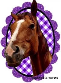SUPER full color strijkapplicatie paard in paars glitter frame