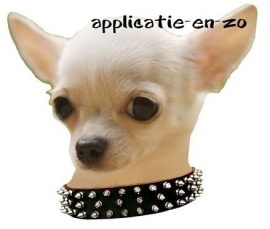 SUPER full color applicatie chihuahua stoer!