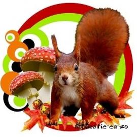 SUPER full color applicatie eekhoorn