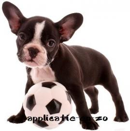 SUPER full color applicatie hond met voetbal