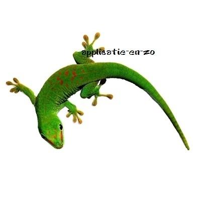 SUPER full color applicatie gekko