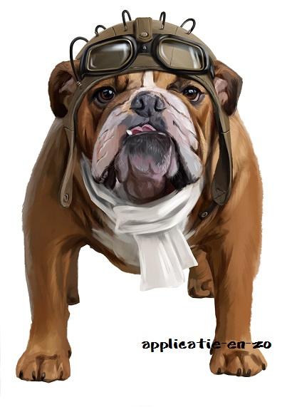 SUPER full color strijkapplicatie Engelse Bulldog