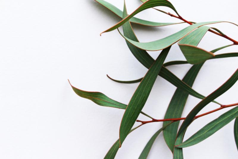 Clean & Happy Hands - Eucalyptus 1L