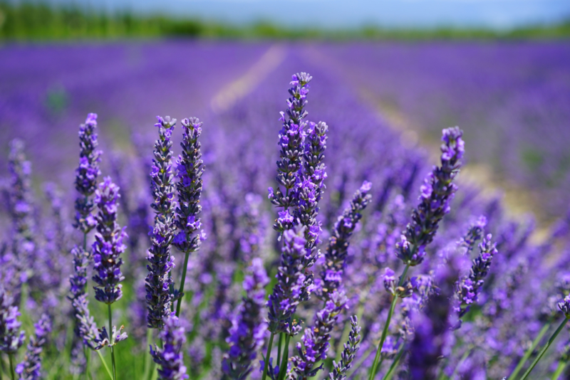 Clean & Happy Hands - Lavendel 1L