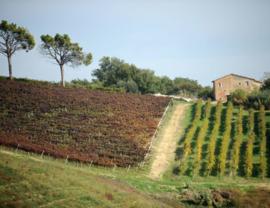 Italië : Saladini Pilastri - Rosso Piceno