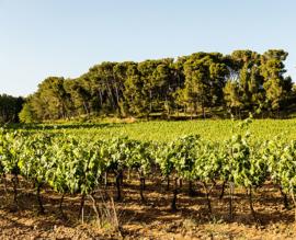 Frankrijk: Domaine Pey Blanc Rosé