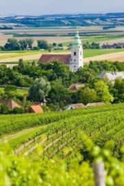 Wijn uit Tsjechië & Slowakije - By The Grape