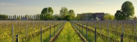 Italië : Italo Cescon Pinot Grigio del Friuli