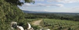 Portugal: Boas Quintas - Encosta da Vinha Tinto