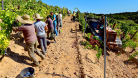 Frankrijk: Corisica - Domaine de Torraccia Rouge