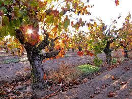 Californië: Brazin Old Vine Zinfandel