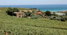 Italië : Gufo Rosso Terre di Chieti