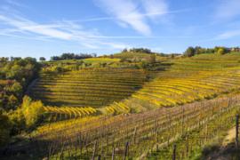 Italië : Dissegna Cabernet Franc