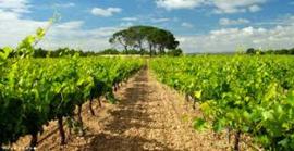 Spanje: Hacienda el Espino - Joven Garnacha Tinto