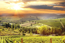 Italie: Cantina Danese Chianti DOCG