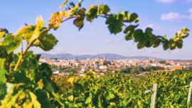 Spanje : Doña Dolca Moscatel de Valencia