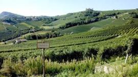 Italie: Brandini Barolo D.O.C.G.