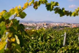 Spanje: Bodegas Enguera Casa Lluch Verdil