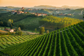 Italië : Corte dei Rovi Moscato Spumante
