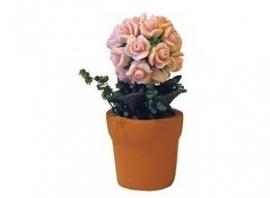 Plant rozen rose