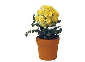 Plant rozen geel