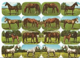 Nostalgische Poezieplaatjes  Kruger 171/298 Paarden