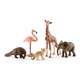 42388 Wildlife  Verschillende dieren.